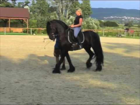 Riding stunt horse