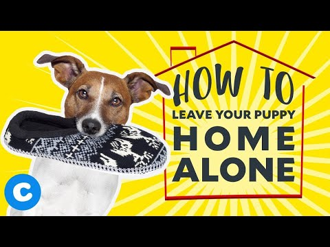 How to Leave Your Puppy Home Alone   Chewy