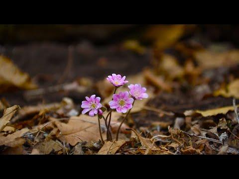 mountain flower wallpaper - pink flower wallpaper