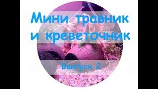Создаем мини травник и креветочник в одном  Выпуск 2