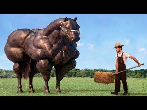 Вот Как Выглядит Самая Большая Лошадь в Мире - Видео онлайн