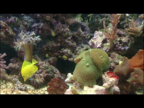 LiveFish