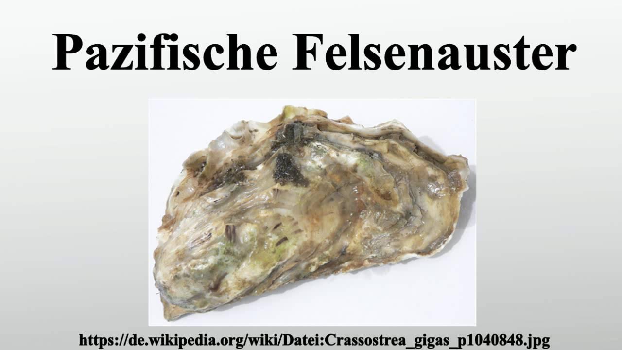 Felsenauster