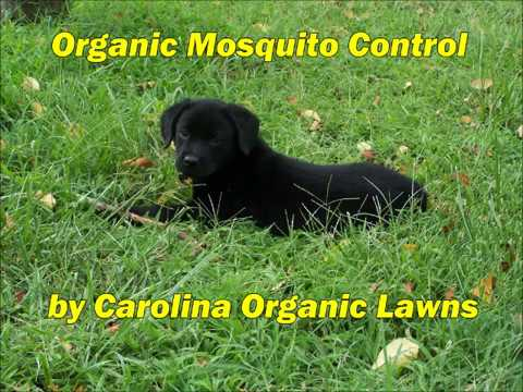 Natural, Organic Mosquito Control Raleigh NC