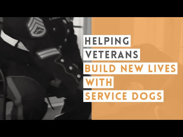 Healing PTSD for Combat Veterans   Video