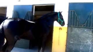Какие тайны хранят в себе эти вороные лошади? На экскурсии в Херес де ла Фронтера.