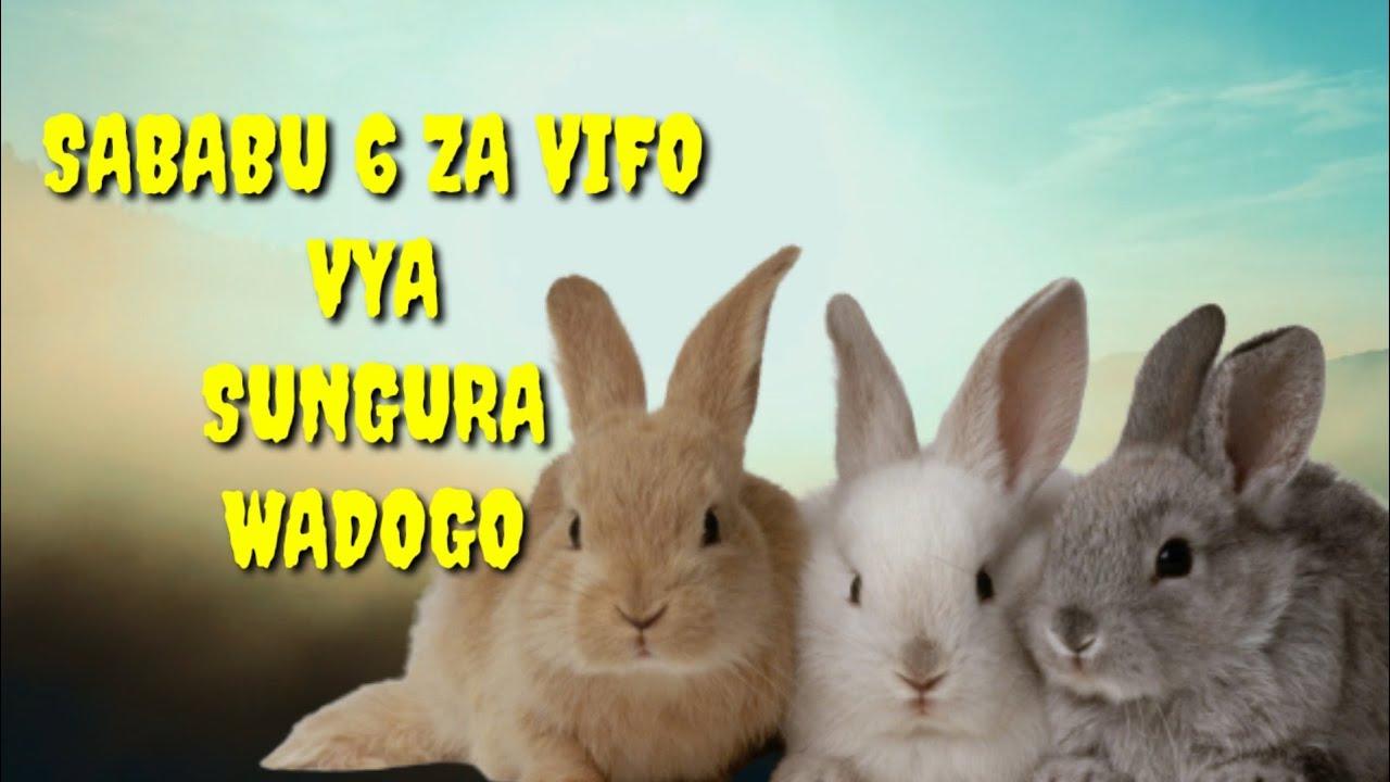 Download Sababu 6 Za Vifo Vya Sungura Wadogo