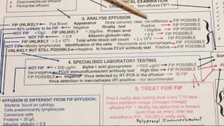 Does my cat have wet FIP? Dr. Addie diagnosis chart
