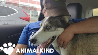 Dog whines with joy seeing owner after 3 years | Animalkind