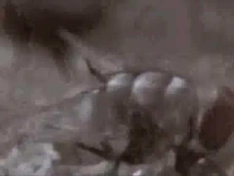 Slipknot - 742617000027 ( Music Video )