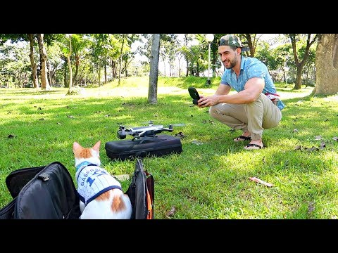 SCARDY Cat's reaction to DRONE! 😂 Cat in a PARK 🌳🐈
