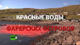 Красные воды Фарерских островов (ТРЕЙЛЕР)