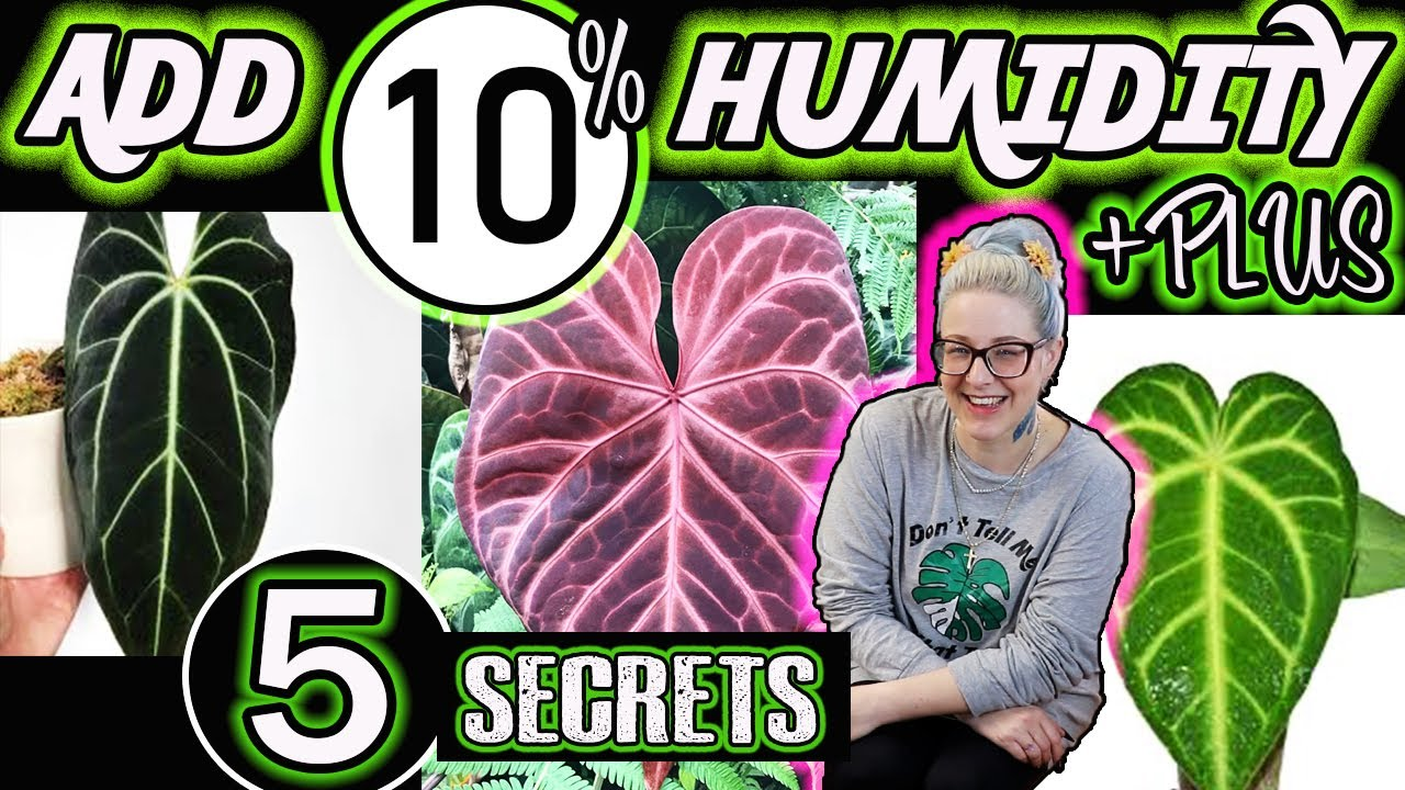 How to Increase Humidity for Your Indoor Plants