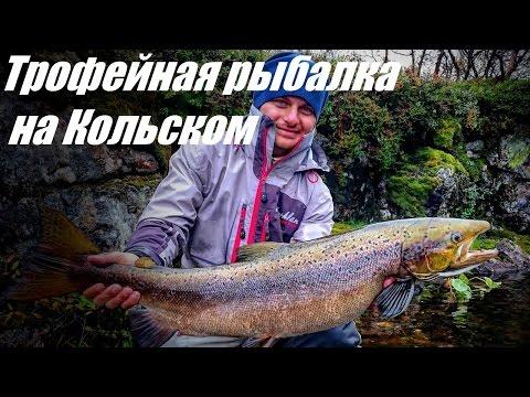 трофейная рыбалка лосось карповидный