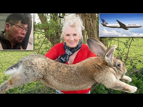 United's killing fluffy bunnies! Celebrity's giant rabbit dies on United Airlines flight