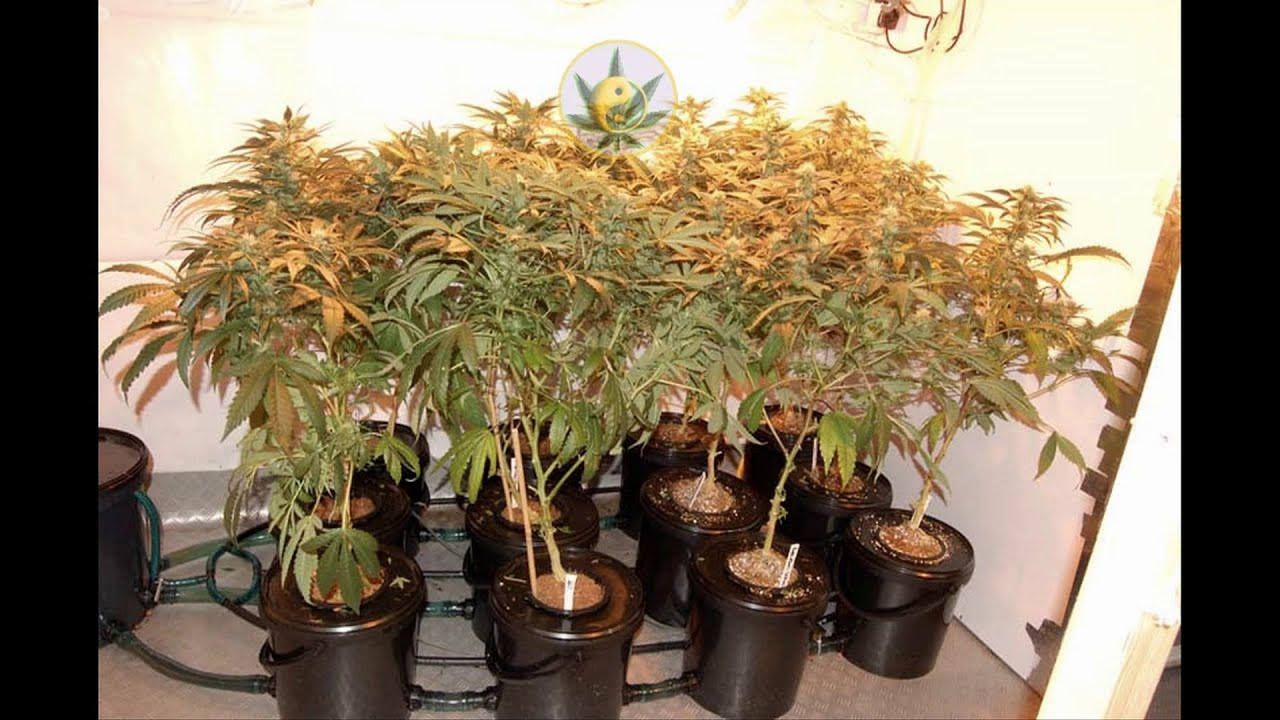 How To Make A Hydroponic Dwc Bubbler System Youtube