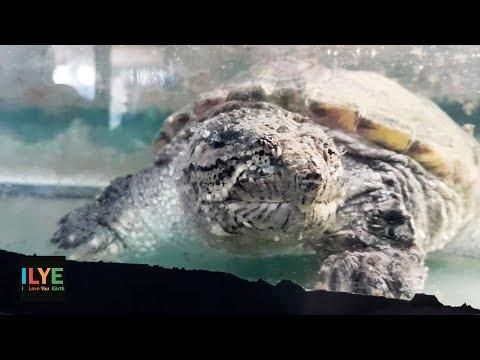 """ILYE - Контактный зоопарк """"Мадагаскар"""" в Яранском краеведческом музее"""