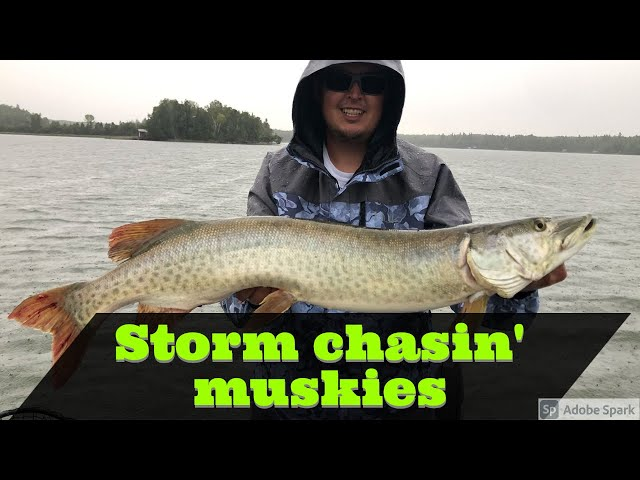 Storm chasing muskies on Eagle Lake from Temple Bay Lodge