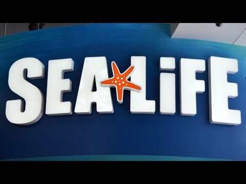SEA LIFE Aquarium Orlando  Tour Including Sharks Seahorses Fish - I-Drive 360 at Orlando Eye
