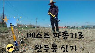 [농사]2020년 완두콩 심기-베스트 파종기[Tip포함…