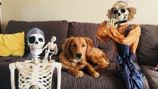 Funny Dog Vs Silly Skeleton!