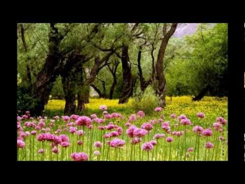 سالار عقیلی - ساغرم شکسته ساقی  -  Sagharam shekasteh Saghi - Salar Aghili