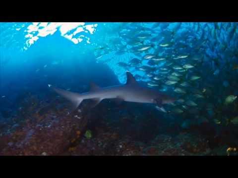 Scuba Diving Costa Rica's Bajo del Diablo Aboard Okeanos Aggressor I