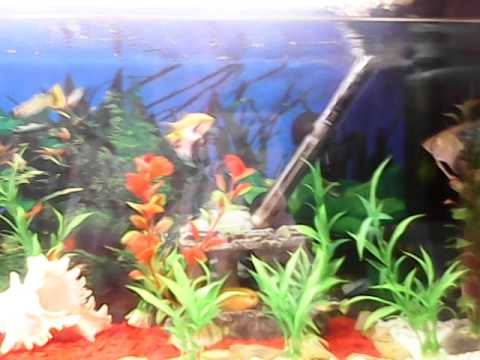 Tropical Fish And Cold Water Fish- Yes You Can Mix Them!
