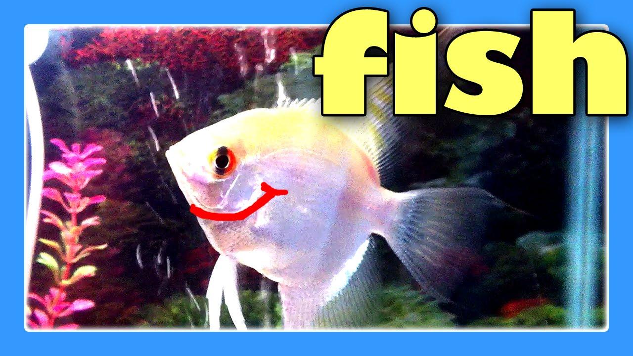 Fish tank aquariums for children fish tank video for for Cat proof fish tank