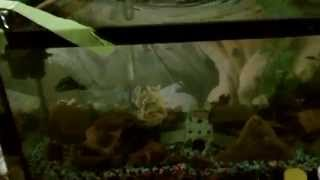 Living Room Aquaponics Set Up - Random Cat Fight