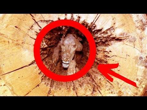 Loggers Can't Believe What They Find In Middle Of A Tree