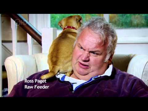 Channel The Truth About Your Dogs Food 720p Hdtv X264 Aac