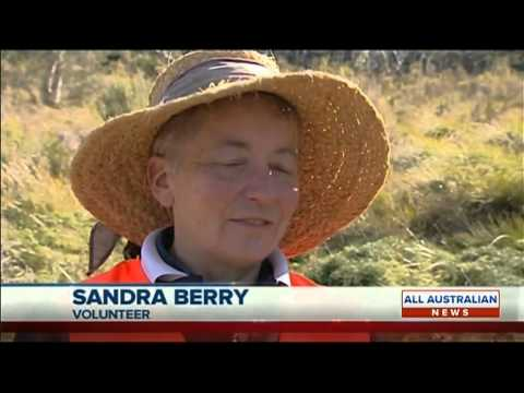 Penrose Swamp Conservation Group on Win TV News 4 July 2014