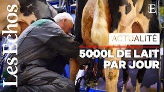 Au Salon de l'Agriculture, la traite des vaches ne s'arrête pas