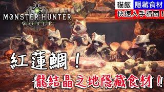 【MHW】龍結晶之地隱藏食材!紅蓮鯛!快速入手指南!| 魔物獵人世界