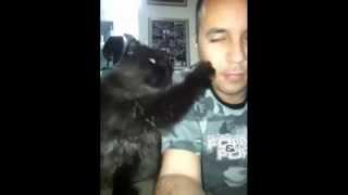 Когда кошка и человек действительно любят друг друга