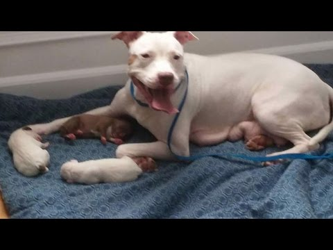 Overprotective Mom and Newborn Pups Get Rescued Before Being Euthanized