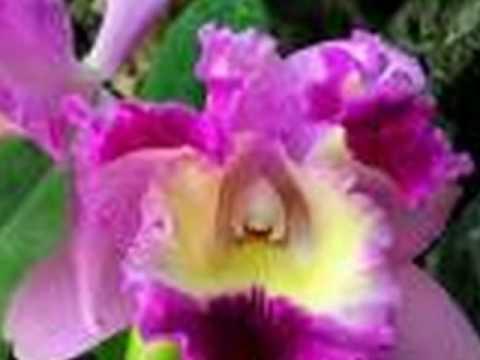 violeta rey