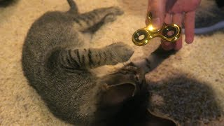 DUDE THE CAT TRIES A FIDGET SPINNER!!