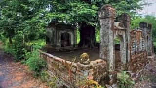 Chuyện lạ đời - Bí ẩn chưa lời giải đáp quanh những cây thị linh thiêng
