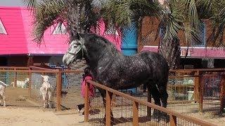 世界最大級の馬がやって来た!