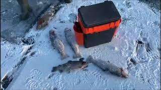Рыбалка со льда в Юдино Открытие сезона и первые поимки форели Клевое Место Юдино