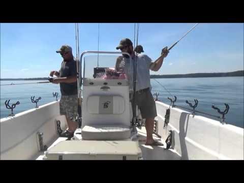 Clarks hill striper fishing 2015 youtube for Clarks hill lake fishing report