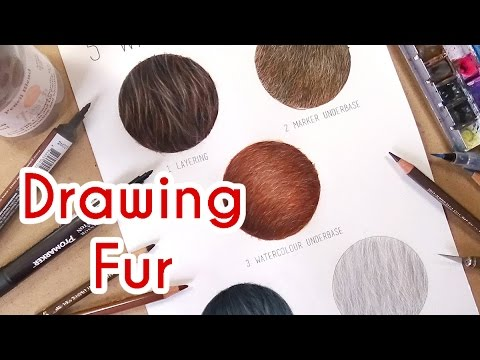 5 methods to draw realistic fur coloured pencil drawing tutorial episode 4