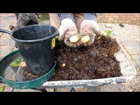 HGV How to grow Potatoes in Seaweed in a bucket experiment. Part 6. The End