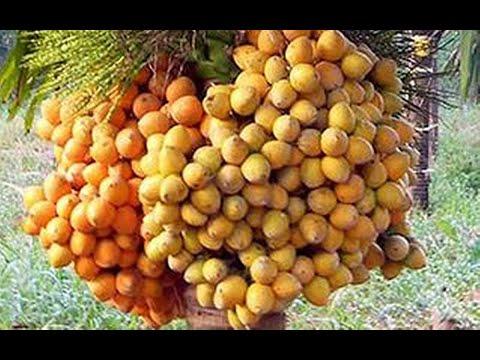 30 05 2013 agri produce rate forecasting dr balachandranayak and inm in arecanut cultn dr k s niranj