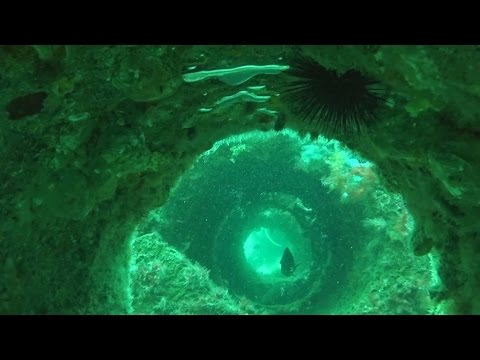 Florida Travel: Saltwater Reef to Freshwater Spring Diving in Dixie County