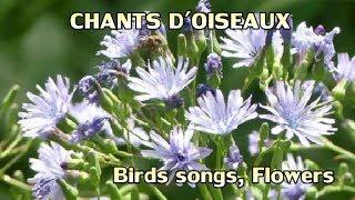 Fleurs et chants d'oiseaux - Birds songs and flowers thumbnail