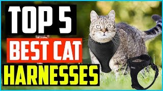 Top 5 Best Cat Harnesses in 2020