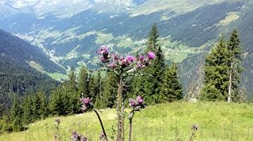 See, Paznauntal, Østrig - Juli 2015